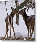 Kissing Deer Metal Print