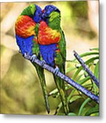Kissing Rainbow Lorikeets 8 Metal Print by Heng Tan