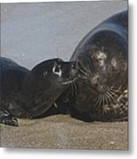 Kissing Seals Metal Print