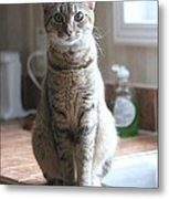 Kitchen Cat Metal Print