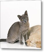 Kitten And Puppy Lying Together Metal Print