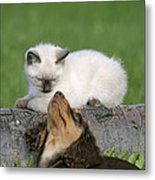 Kitten And Puppy Playing Metal Print