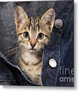 Kitten In Jean Jacket Metal Print
