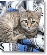 Kitten In The Blanket Metal Print
