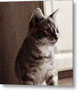Kitten In The Light Metal Print