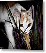 Kitten In The Plant Metal Print