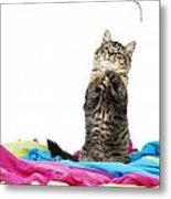Kitten Playing With String Metal Print