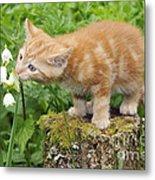 Kitten With Flowers Metal Print