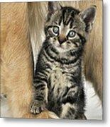 Kitten With Golden Retriever Metal Print
