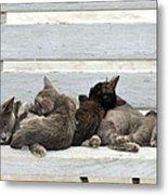 Kittens In Hydra Island Metal Print