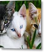 Kittens In The Cradle Metal Print