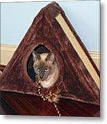 Kitty A-frame Metal Print