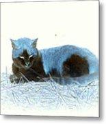 Kitty Blue IIII Metal Print