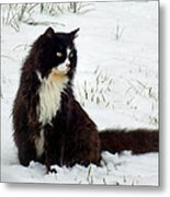 Kitty Cat In The Snow Metal Print
