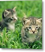 Kitty In Grass Metal Print