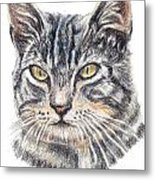 Kitty Kat Iphone Cases Smart Phones Cells And Mobile Cases Carole Spandau Cbs Art 337 Metal Print