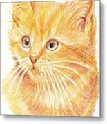 Kitty Kat Iphone Cases Smart Phones Cells And Mobile Cases Carole Spandau Cbs Art 339 Metal Print