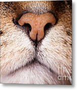 Kitty Nose  Metal Print