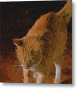 Kitty Paws Metal Print