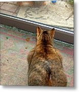 Kitty Watches The Squirrel Metal Print