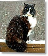 Kittycat In The Snow On The Fence Metal Print