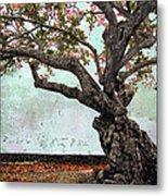 Knotted Tree Metal Print by Daniel Hagerman
