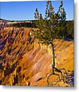 Know Your Roots - Bryce Canyon Metal Print