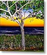 Ko Olina Tree In Sunset Metal Print