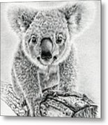 Koala Oxley Twinkles Metal Print