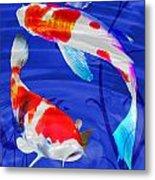 Kohaku Koi In Deep Blue Pool Metal Print