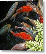 Koi Fish I Metal Print
