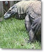 Komodo Dragon Metal Print
