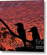 Kookaburras At Sunset Metal Print