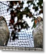 Kookaburra's On Guard At The Buffalo Zoo Metal Print