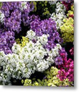 Many Colors Make A Beautiful Garden Metal Print