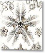 Kunstformen Der Natur Metal Print by Ernst Haeckel