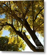 La Boca Ranch Cottonwood Metal Print