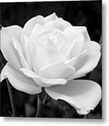 La Rosa In Black And White Metal Print