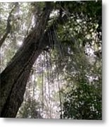 La Tigra Rainforest Canopy Metal Print