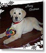 Lab Pup Merry Christmas Metal Print
