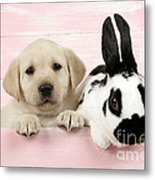 Lab Puppy And Bunny Metal Print