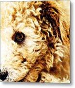 Labradoodle Dog Art - Sharon Cummings Metal Print