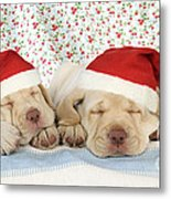 Labrador Puppy Dogs Wearing Christmas Metal Print