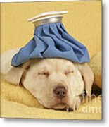 Labrador Puppy With Ice Pack Metal Print