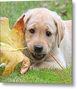 Labrador Retriever Puppy With Autumn Leaf Metal Print