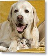Labrador With Cat Metal Print