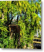 Laburnum By The River Metal Print