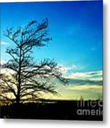 Lacassine Tree Metal Print