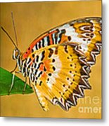 Lacewing Butterfly Cethosia Sp Metal Print