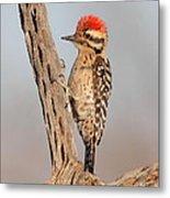 Ladder-backed Woodpecker Metal Print